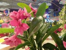 Искусственные цветки в выглядеть торгового центра красивом стоковые фотографии rf