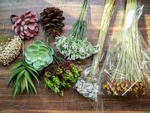 Искусственный завод succulents и сухой цветок стоковые изображения rf