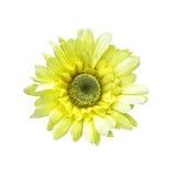 Искусственный изолированный солнцецвет стоковое изображение