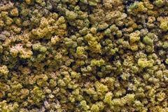 Искусственный полог леса Стоковое Фото