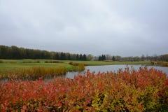 Искусственный пруд на поле для гольфа стоковые фотографии rf
