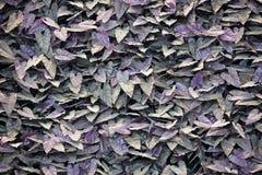 искусственный фиолетовый папоротник листает стена Стоковое фото RF