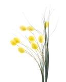 Искусственный флористический состав стоковые фото