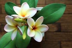 Искусственный plumeria цветет в баке на деревянном столе, взгляд сверху Стоковая Фотография