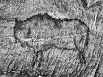 Искусство в пещере песчаника Черная краска углерода бизона бесплатная иллюстрация