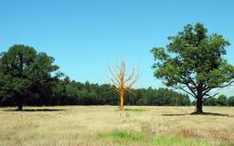 Искусство в природе, оранжевом дереве Стоковая Фотография