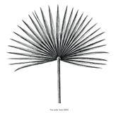 Искусство зажима гравировки притяжки руки лист ладони вентилятора винтажное изолированное на w бесплатная иллюстрация