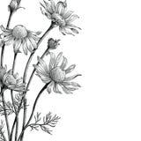 Искусство зажима притяжки руки цветков стоцвета винтажное изолированное на белом b иллюстрация вектора