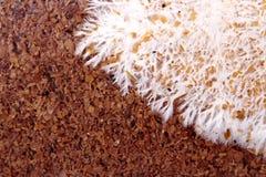 Искусство зараженного гриба на сумке бамбукового гриба, текстура Стоковые Изображения RF