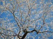 Искусство зимы Стоковая Фотография
