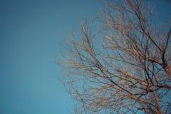 Искусство и предпосылка обоев леса дерева Стоковое Изображение