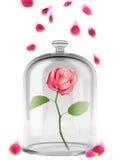 Искусство предпосылки заколдовало розовую Стоковое Фото