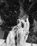 Искусство природы Стоковая Фотография RF