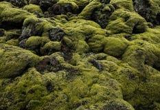 Исландский ландшафт поля лавы при вулканическая порода покрытая сочным зеленым мхом Стоковые Фотографии RF