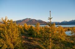 Исландский лес в Hrisey Стоковое фото RF