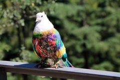 Испания Каталония Барселона Красивые покрашенные голуби в парке Стоковые Изображения