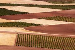 Испанские поля стоковые изображения