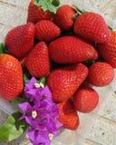 Испанские, сладостные клубники с цветком бугинвилии Стоковое Фото