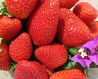 Испанские, сладостные клубники с цветком бугинвилии Стоковые Изображения