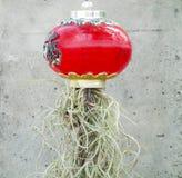 Испанский мох украшает Стоковая Фотография RF