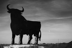 испанский язык быка стоковое изображение rf