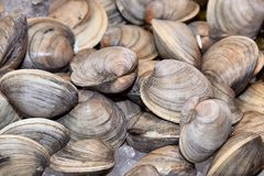 испаренные clams Стоковые Фото