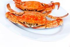 2 испаренный краб моря в блюде Стоковое Изображение