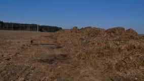 Испаряться куча позема на поле фермы в голландской сельской местности сток-видео