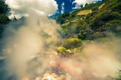 Испаряться природа в Новой Зеландии Стоковое фото RF
