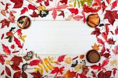 Испеките, печенья плодоовощ, калина, черный chokeberry, красная рябина, листья осени и диаграмма красного кота на светлой предпос стоковая фотография