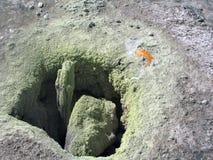 испеките яичко Стоковая Фотография RF