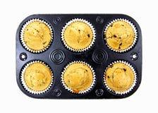 испеченные булочки шоколада обломока свеже Стоковые Фото