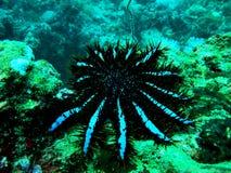 исполинские starfish Стоковое фото RF