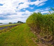 используемый сахар этанола тросточки биотоплива Австралии Стоковая Фотография RF