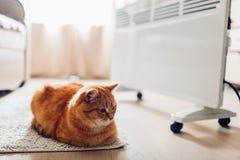 Используя подогреватель дома Сезон топления Лежать кота грея прибором стоковая фотография rf