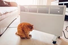 Используя подогреватель дома Сезон топления Сидеть кота грея прибором стоковое изображение rf
