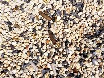 Используемые кожухи пули Стоковое Фото