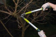 Используя триммер сада Стоковое фото RF