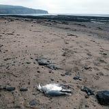 Испуг побережье Англия северного Йоркшира отверстия Стоковые Изображения RF