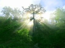 испускает лучи горизонтальный lush Стоковые Фото