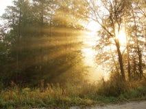 испускает лучи утро Стоковая Фотография RF