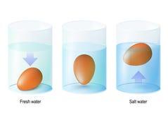 Испытайте яичко Яичка экспериментам по и испытанию науки для свежести в одном иллюстрация штока
