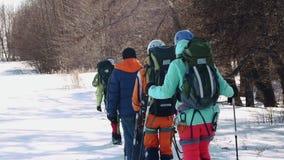 Испытанные альпинисты с рюкзаками за задней частью идут линия в снеге вдоль сухих деревьев акции видеоматериалы