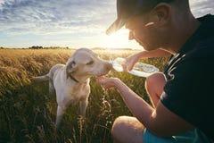 Испытывающая жажду собака на заходе солнца Стоковое фото RF
