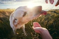 Испытывающая жажду собака на заходе солнца Стоковое Фото