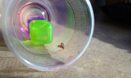 Испытывающая жажду черепашка в стекле питья Стоковое фото RF