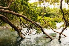 Испытывающее жажду дерево Стоковые Изображения RF