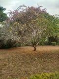 Испытывающее жажду дерево Стоковое Изображение RF
