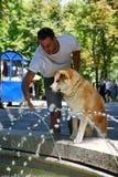 Испытывающий жажду парк собаки публично Стоковое Изображение RF