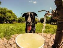 Испытывающий жажду собака Стоковое Изображение